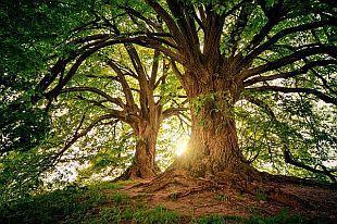 tree-mark-min